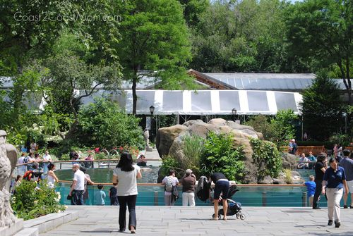 Middle of Central Park Zoo
