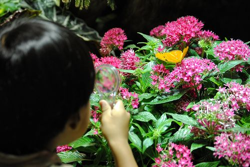 AMNH butterfly exhibit colors