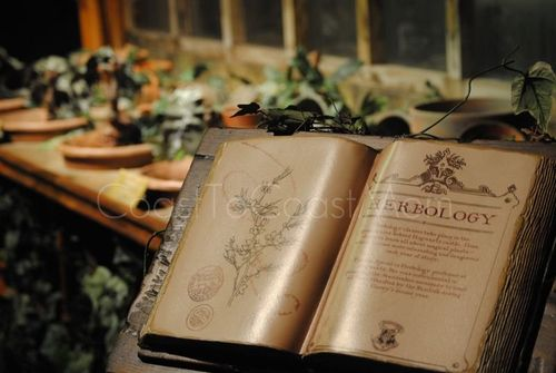 Harry Potter Exhibit Herbology Watermarked