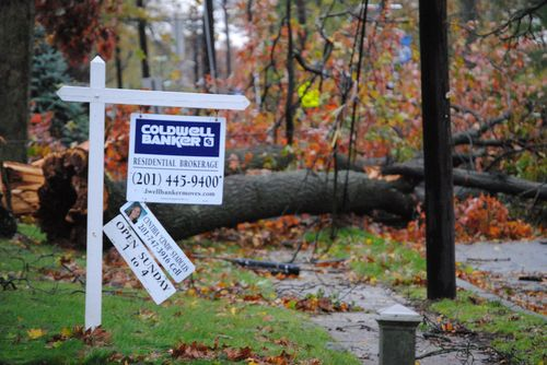 Hurricane Sandy trees down