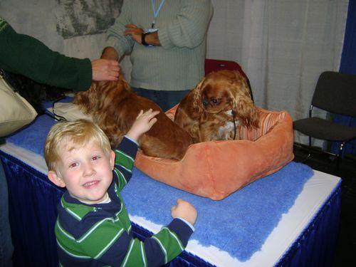 Meet The Breeds pet dog