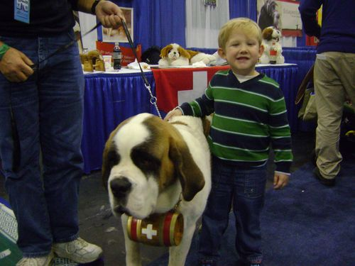 Meet The Breeds big dog