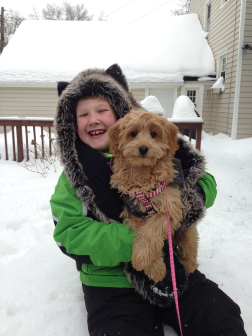 Boy and puppy playing in snow