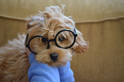 Dog with glasses Mr Peabody and Sherman